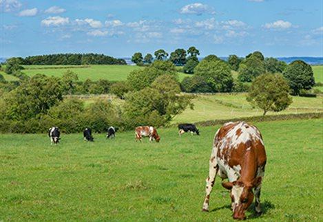 Aπό 26 Μαρτίου οι αιτήσεις Βιολογικής Κτηνοτροφίας