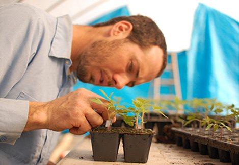 Οι παραγωγοί πρέπει να είναι εγγεγραμμένοι στο Μητρώο Αγροτών, αλλά δεν χρειάζεται άδεια εμπορίας, καθώς θα προορίζονται για ιδία χρήση.